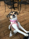 Cissie, my companion on brewery tours